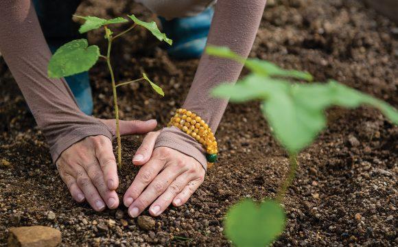 Grow a Tree